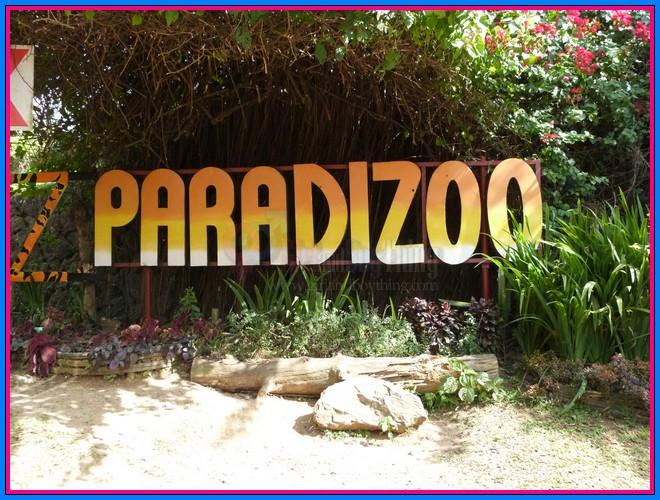 Paradizoo Girlandboything83