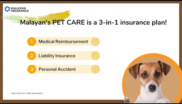 A Furpect Love & Protection: Get Your Dog Insured With Malayan's Pet Care Insurance