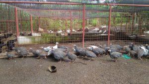 Costales Nature Farms organic farm tour