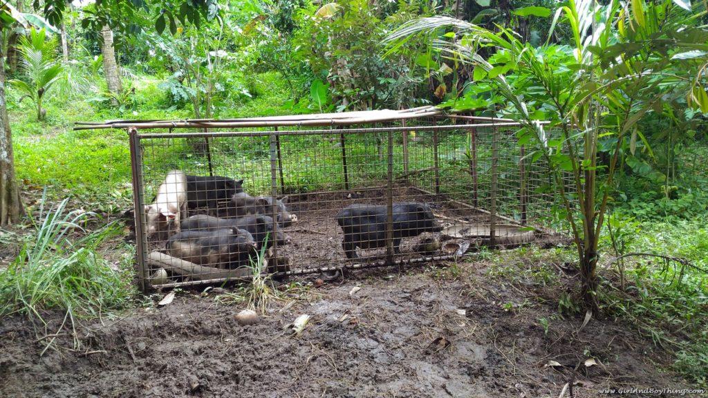 Forest Wood Garden wild boar
