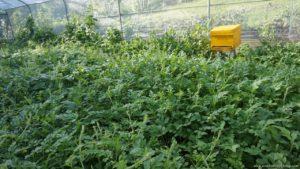 Canaan Hill Farm And Honey Garden