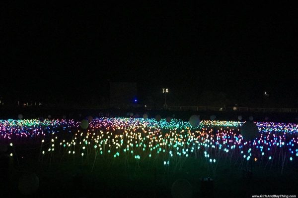 Magical Field Of Lights