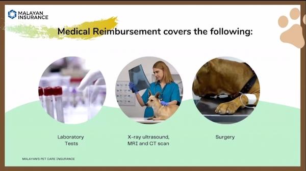 dog insurance philippines
